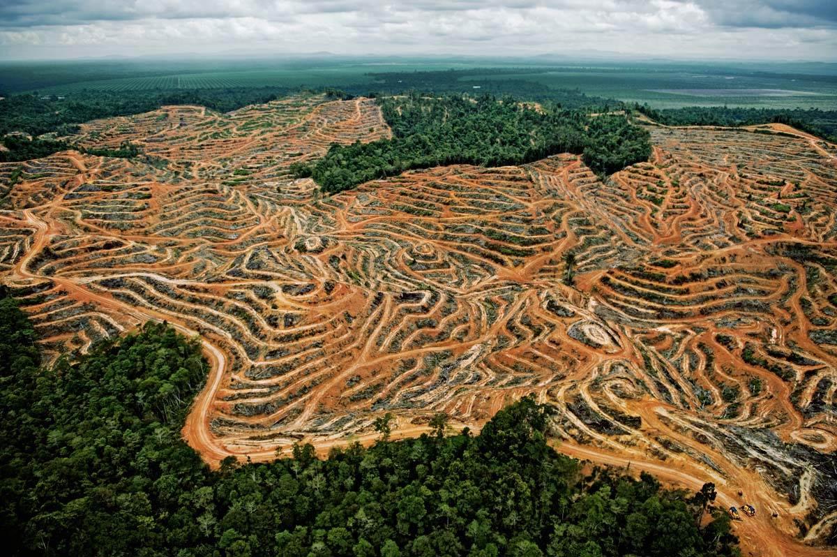Skogsavverkning i Borneo