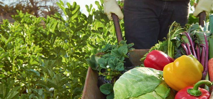 10 snabba tips för att leva mer hållbart