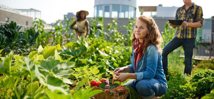 Anlägg en skolträdgård – tips för lärare att få in odling i klassrummet